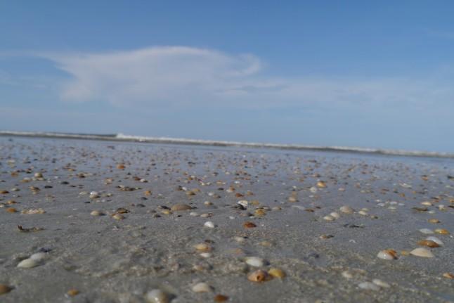 ocean shells2
