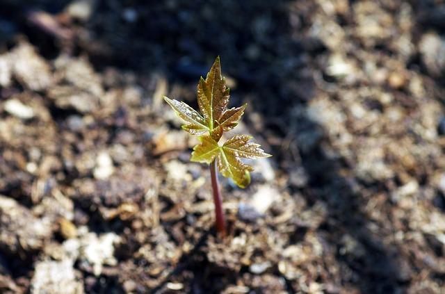 growth-621090_640